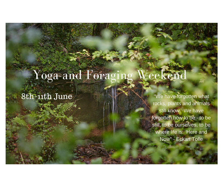 yoga and foraging weekend